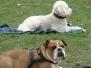 15.04.2012 Hundetraining