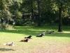 2012-09-16_hundetraining_45
