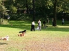 2012-09-16_hundetraining_47