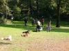 2012-09-16_hundetraining_48