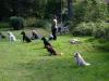 2012-09-16_hundetraining_55