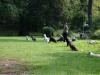 2012-09-16_hundetraining_61
