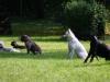 2012-09-16_hundetraining_62