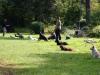 2012-09-16_hundetraining_63
