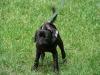 2012-06-17_hundetraining_005
