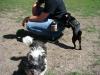 2012-06-17_hundetraining_012