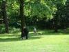 2012-06-17_hundetraining_021