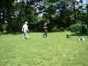 2012-06-17_hundetraining_033