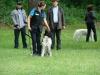 2012-06-17_hundetraining_055