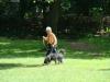 2012-06-17_hundetraining_059