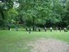 2012-06-17_hundetraining_066