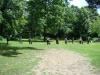 2012-06-17_hundetraining_083