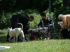 2012-06-17_hundetraining_100