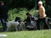2012-06-17_hundetraining_101