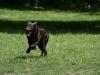 2012-06-17_hundetraining_103