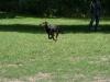 2012-06-17_hundetraining_105