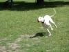 2012-06-17_hundetraining_106
