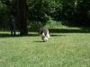 2012-06-17_hundetraining_107
