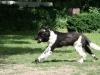 2012-06-17_hundetraining_108