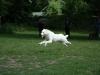 2012-06-17_hundetraining_110