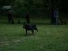 2012-06-17_hundetraining_113