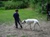 2012-06-17_hundetraining_123