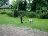 2012-06-17_hundetraining_125