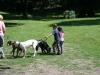 2012-06-17_hundetraining_136