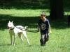 2012-06-17_hundetraining_138