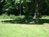 2012-06-17_hundetraining_172