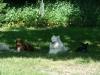 2012-06-17_hundetraining_178