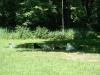 2012-06-17_hundetraining_181