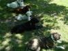 2012-06-17_hundetraining_185