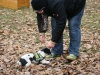 2012-11-18_hundetraining_02