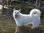 19.08.2012 Hundetraining