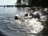 2012-08-19_badespass_heerstr_053