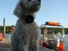 2012-08-19_badespass_heerstr_217