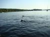 2012-08-19_badespass_heerstr_236