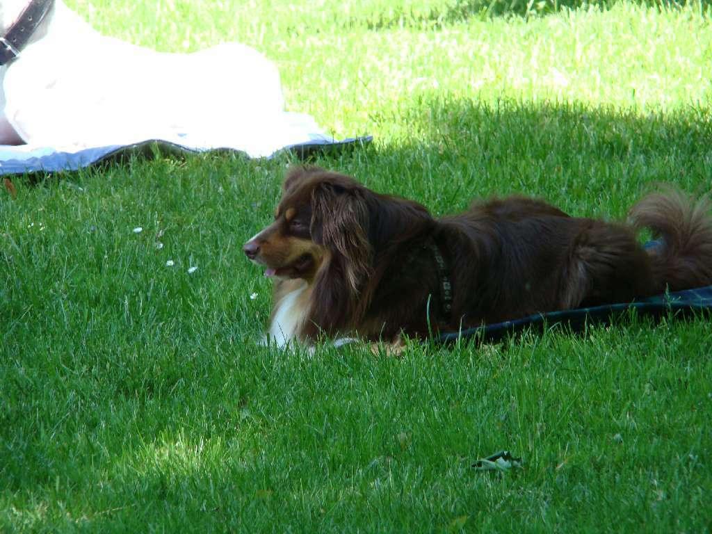 2012-05-20_hundetraining_16