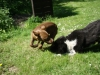 2012-05-20_hundetraining_01