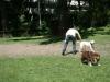 2012-05-20_hundetraining_02