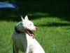 2012-05-20_hundetraining_06