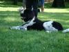 2012-05-20_hundetraining_23
