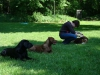 2012-05-20_hundetraining_30