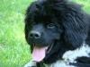 2012-05-20_hundetraining_31