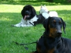 2012-05-20_hundetraining_37