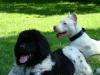 2012-05-20_hundetraining_38