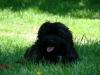 2012-05-20_hundetraining_40