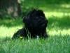 2012-05-20_hundetraining_41
