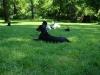 2012-05-20_hundetraining_45